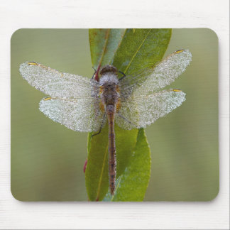 Morning Dew Dragonfly Mousepad Mouse Pad