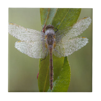 Morning Dew Dragonfly Small Square Tile