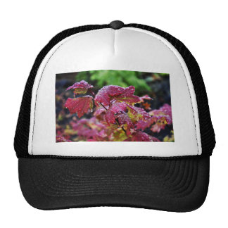 Morning Dew Trucker Hat