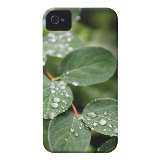 Morning dew in garden Case-Mate iPhone 4 cases