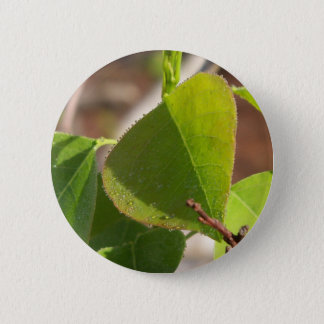 morning Dew on Chinese tallow leaf 6 Cm Round Badge