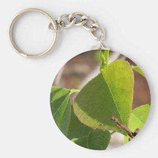 morning Dew on Chinese tallow leaf Key Ring
