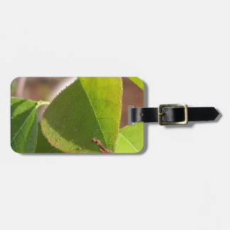 morning Dew on Chinese tallow leaf Luggage Tag