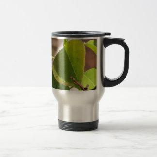 morning Dew on Chinese tallow leaf Travel Mug