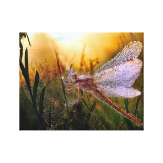 Morning Dew on Dragonfly Canvas Print