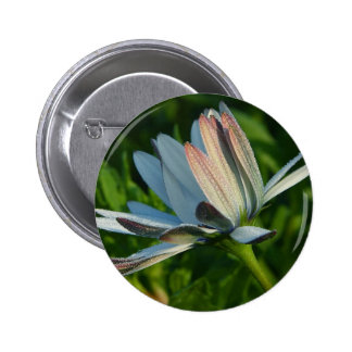 Morning Dew On Flower Pinback Buttons