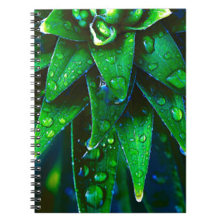 Morning Dew On Plant Note Book