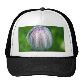 Morning Dew On Purple White Flower In Balboa Park Trucker Hats