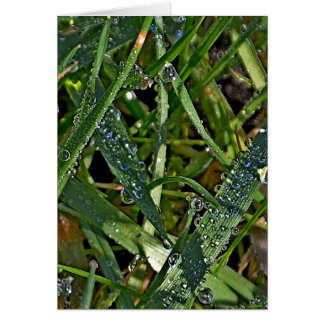 Morning dew on the grass greeting card