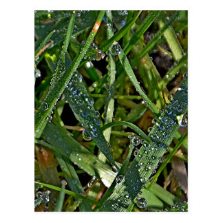 Morning dew on the grass post cards