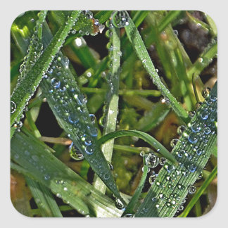Morning dew on the grass square sticker