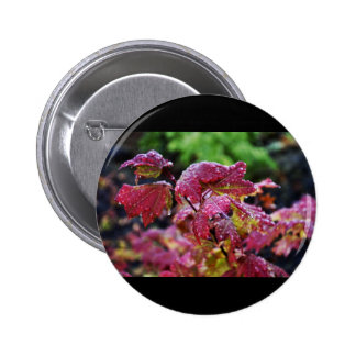 Morning Dew Pinback Buttons
