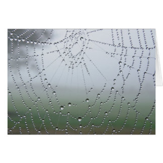 Morning Dew Spider Web Greeting Card