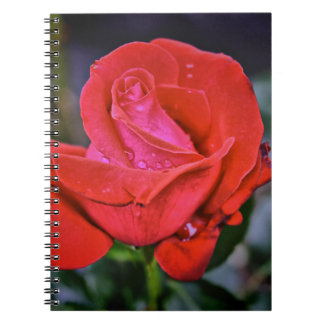 Morning Dew Spiral Note Book