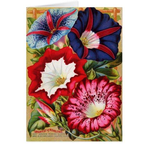 Morning Glories Card