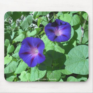 Morning Glories Mousepad