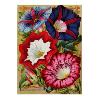 Morning Glories Print