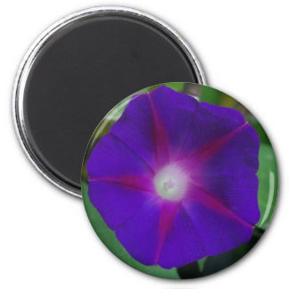 MORNING GLORY 6 CM ROUND MAGNET