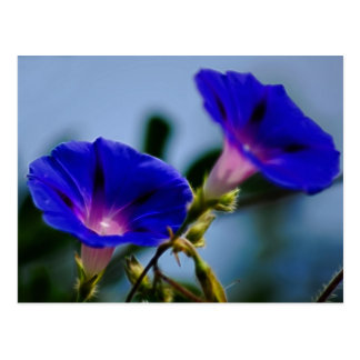 Morning Glory and meaning Post Cards