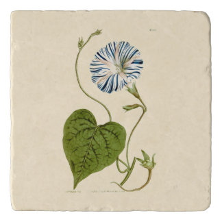 Morning Glory Blue Illustration Trivets