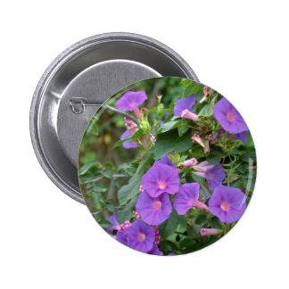Morning glory Deya Mallorca flowers Pinback Button