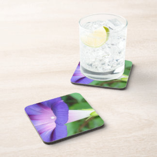 Morning Glory Drink Coasters