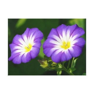 Morning glory flower gallery wrap canvas