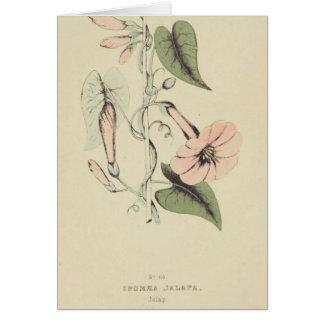 Morning Glory Flower Card