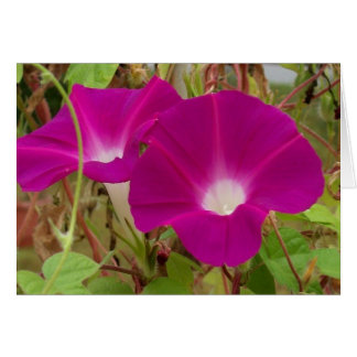Morning Glory Flower Cards in Bright Vibrant Color