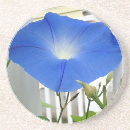 Morning Glory Flower Drink Coasters