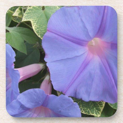 Morning Glory Flower Coasters
