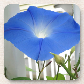 Morning Glory Flower Coaster