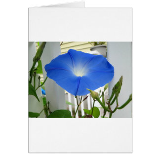 Morning Glory Flower Greeting Card