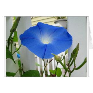 Morning Glory Flower Greeting Card