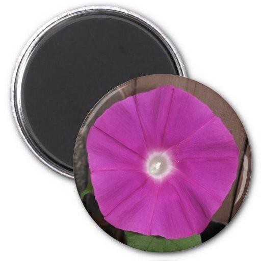 Morning Glory Flower Magnet