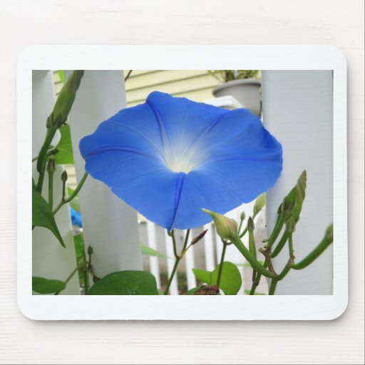 Morning Glory Flower Mouse Pads
