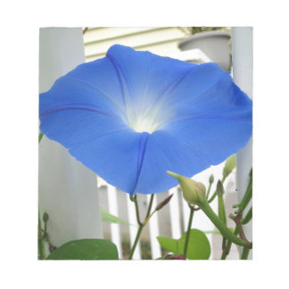 Morning Glory Flower Notepad