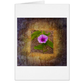 Morning glory flower on a textured background card