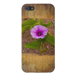 Morning Glory flower on a textured background iPhone 5 Case