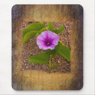 Morning Glory flower on a textured background Mouse Pad