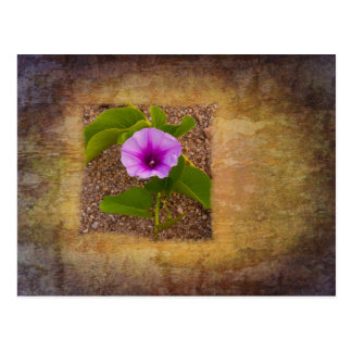 Morning glory flower on a textured background postcard