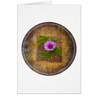 Morning glory flower on textured background greeting cards