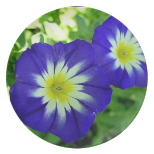 Morning Glory Flower Plate