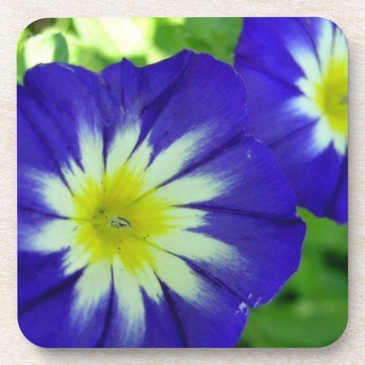 Morning Glory Flower Set of Coasters