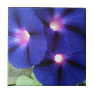 Morning Glory Flower Tile