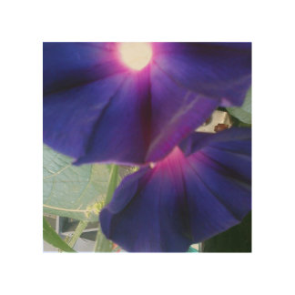 Morning Glory Flower Wood Canvas