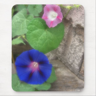 Morning glory Flowers 2 Mouse Pad