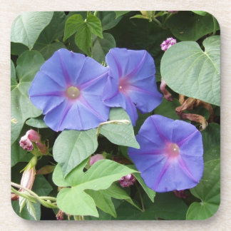 Morning Glory Flowers Coasters