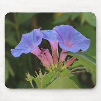 Morning glory flowers mouse mats