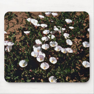 Morning Glory Mouse Pads